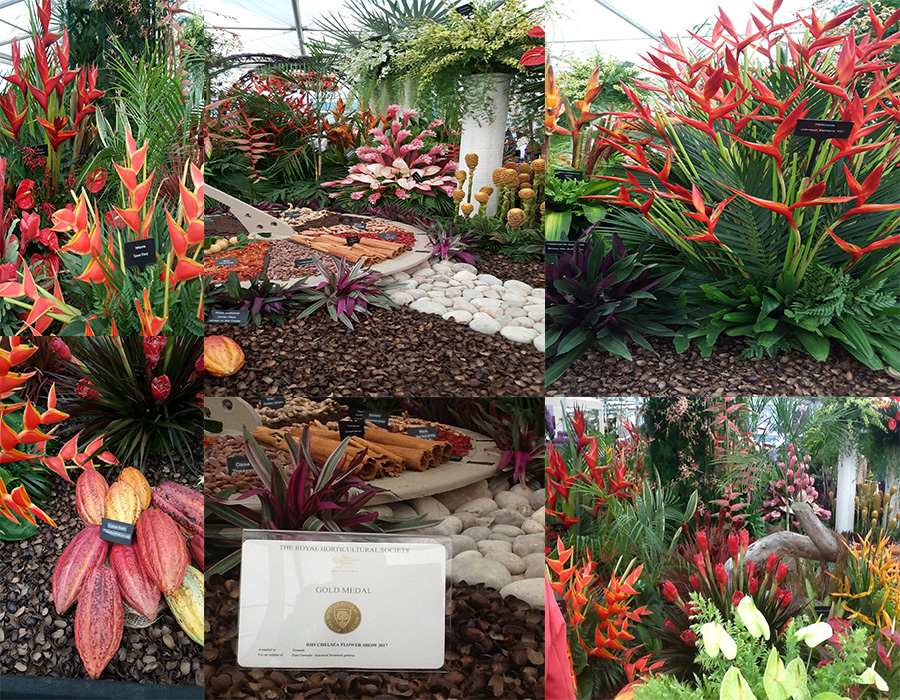 Pure grenada wins 13th gold medal at rhs chelsea flower - Chelsea flower show gold medals ...